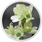 Dogwood In Bloom Round Beach Towel