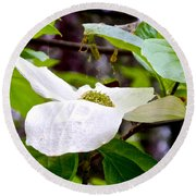 Dogwood In Yosemite Valley-2013 Round Beach Towel