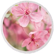 Dogwood Tree Bloom Close Up In Spring Round Beach Towel