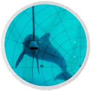 Dolphin Experiment Round Beach Towel
