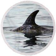 Dolphin In Monterey Round Beach Towel