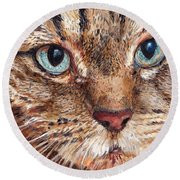 Domestic Tabby Cat Round Beach Towel