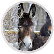 Donkey And The Mule Round Beach Towel