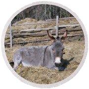Donkey In Hay Round Beach Towel