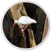 White Ibis Bird Round Beach Towel