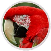 Dont You Dare To Stare Macaw Round Beach Towel