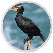 Double Crested Cormorant Round Beach Towel