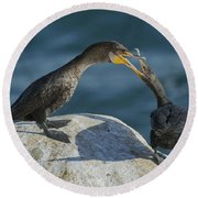 Double-crested Cormorants Round Beach Towel