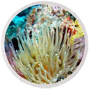Double Giant Anemone And Arrow Crab Round Beach Towel