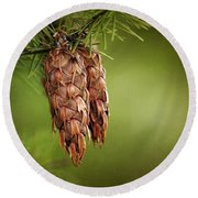 Douglas Fir Cones Round Beach Towel