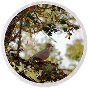Dove In Autumn Oak Tree Lower Lake Ca Round Beach Towel