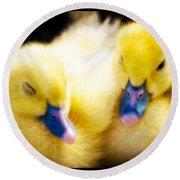 Downy Ducklings Round Beach Towel