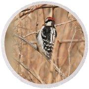 Downy Woodpecker In Brush Round Beach Towel