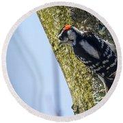 Downy Woodpecker - Male Round Beach Towel