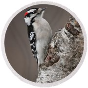 Downy Woodpecker Pictures 11 Round Beach Towel