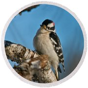 Downy Woodpecker Pictures 23 Round Beach Towel