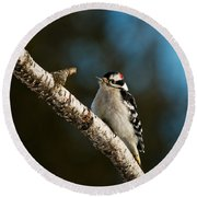 Downy Woodpecker Pictures 25 Round Beach Towel