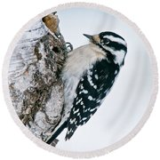 Downy Woodpecker Pictures 27 Round Beach Towel