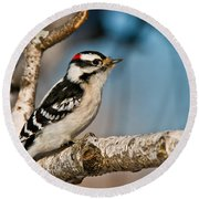 Downy Woodpecker Pictures 34 Round Beach Towel