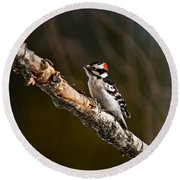 Downy Woodpecker Pictures 36 Round Beach Towel