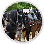 Draft Horses All In A Row Round Beach Towel