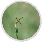 Dragon Fly 3 Round Beach Towel