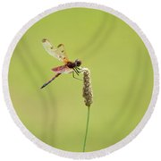 Dragon Fly 7 Round Beach Towel