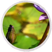Dragon Fly On Bud And Water Lily Horizontal Number One Round Beach Towel