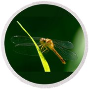 Dragon Fly On Grass Round Beach Towel