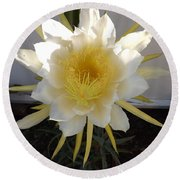 Dragon Fruit Bloom In The Morning Round Beach Towel