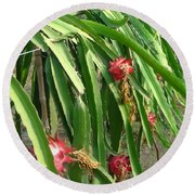 Dragon Fruit Tree Round Beach Towel