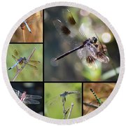 Dragonflies On Twigs Collage Round Beach Towel