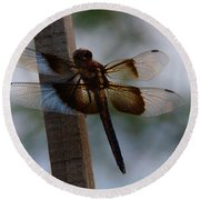 Dragonfly At Rest Round Beach Towel