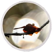 Dragonfly Bathing In Sunset Round Beach Towel