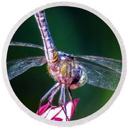 Dragonfly Close Up Round Beach Towel