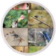 Dragonfly Collage 3 Round Beach Towel