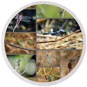 Dragonfly Collage Round Beach Towel