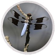 Dragonfly Common Whitetail Round Beach Towel