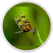 Dragonfly Eating Round Beach Towel