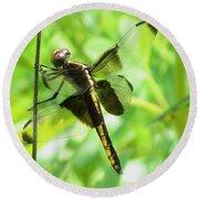 Dragonfly Female Widow Skimmer Round Beach Towel