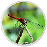 Dragonfly Hard At Work Round Beach Towel