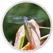 Dragonfly In Early Autumn Round Beach Towel
