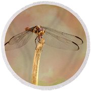 Dragonfly In Fantasy Land Round Beach Towel