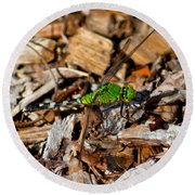 Dragonfly In Mulch Round Beach Towel