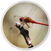 Dragonfly Light Round Beach Towel
