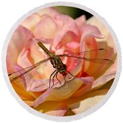Dragonfly On A Rose Round Beach Towel