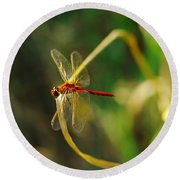 Dragonfly On A Summer Day Round Beach Towel