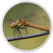 Dragonfly On A Wire Round Beach Towel