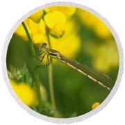 Dragonfly On Birds-foot Trefoil Round Beach Towel