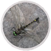 Dragonfly On Rock Round Beach Towel